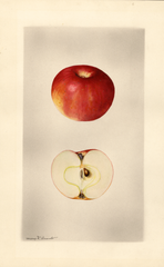 Apples, Milam (1928)