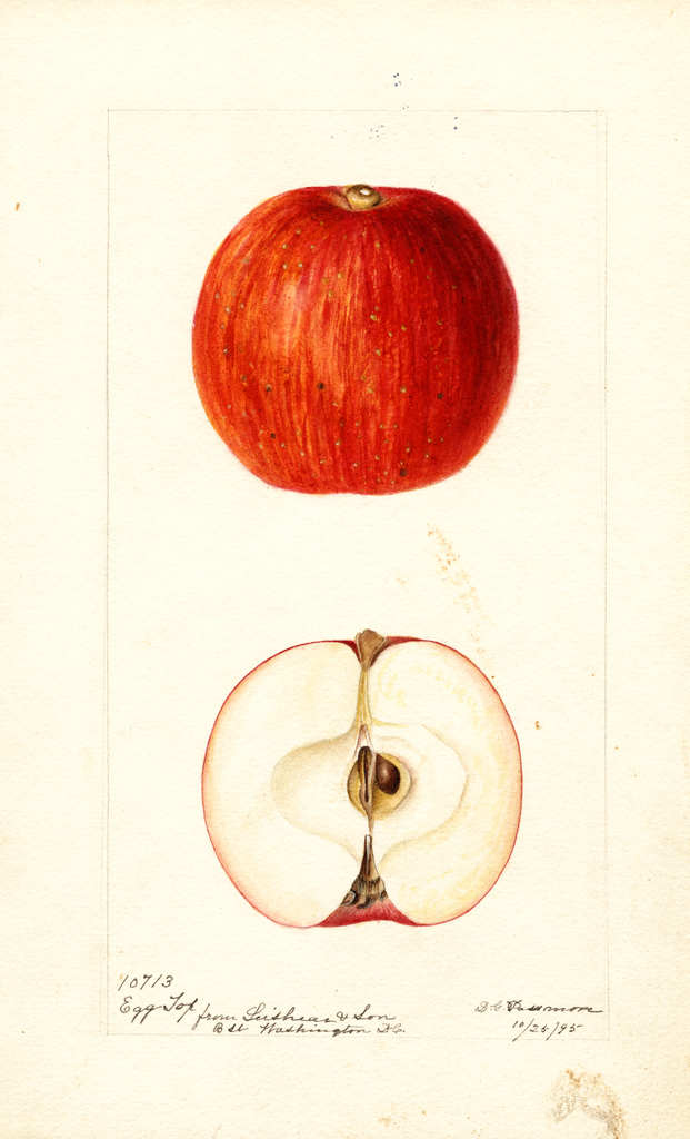 Apples, Egg Top (1895)