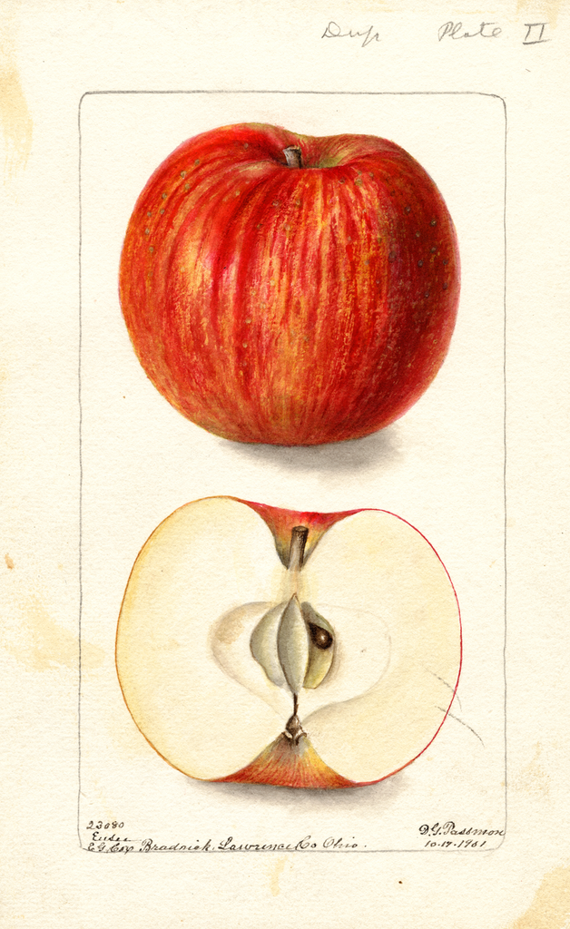 Apples, Ensee (1901)