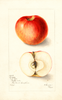 Apples, Ensee (1905)