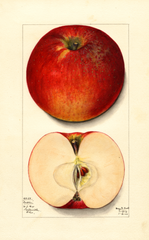 Apples, Ensee (1913)
