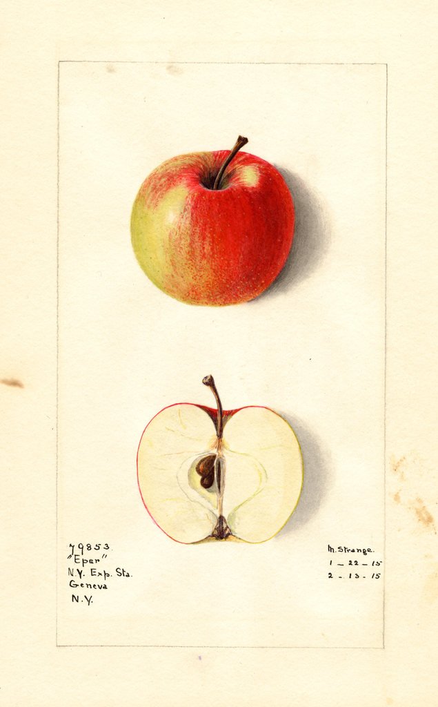 Apples, Eper (1915)