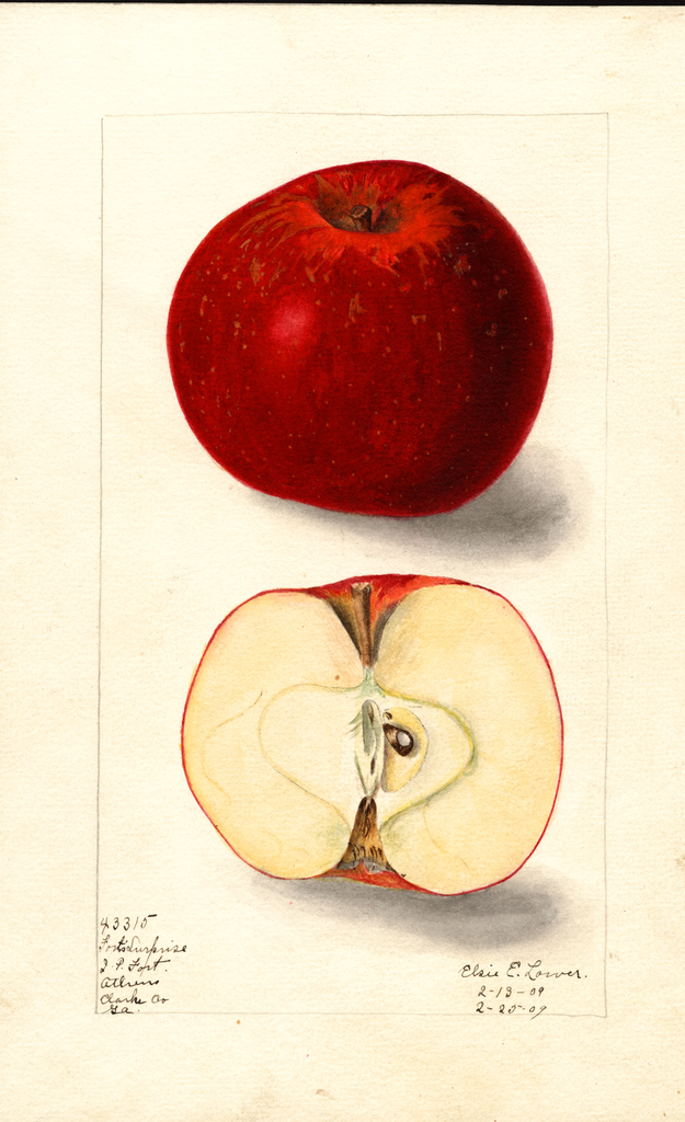 Apples, Forts Surprise (1909)