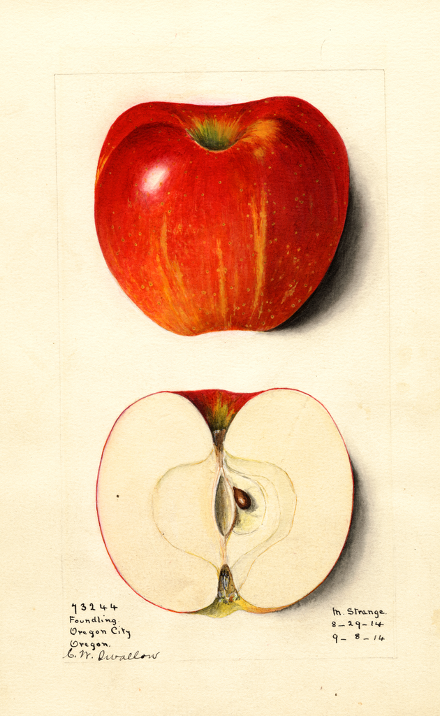Apples, Foundling (1914)