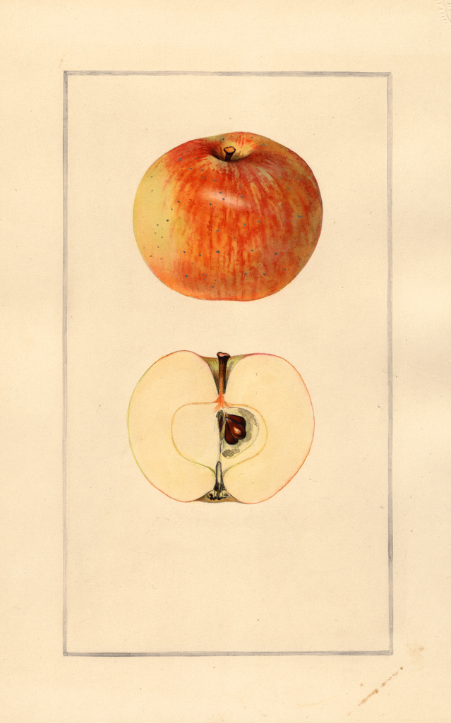 Apples, Fourth Of July (1925)
