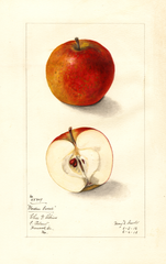 Apples, Garden Sweet (1912)