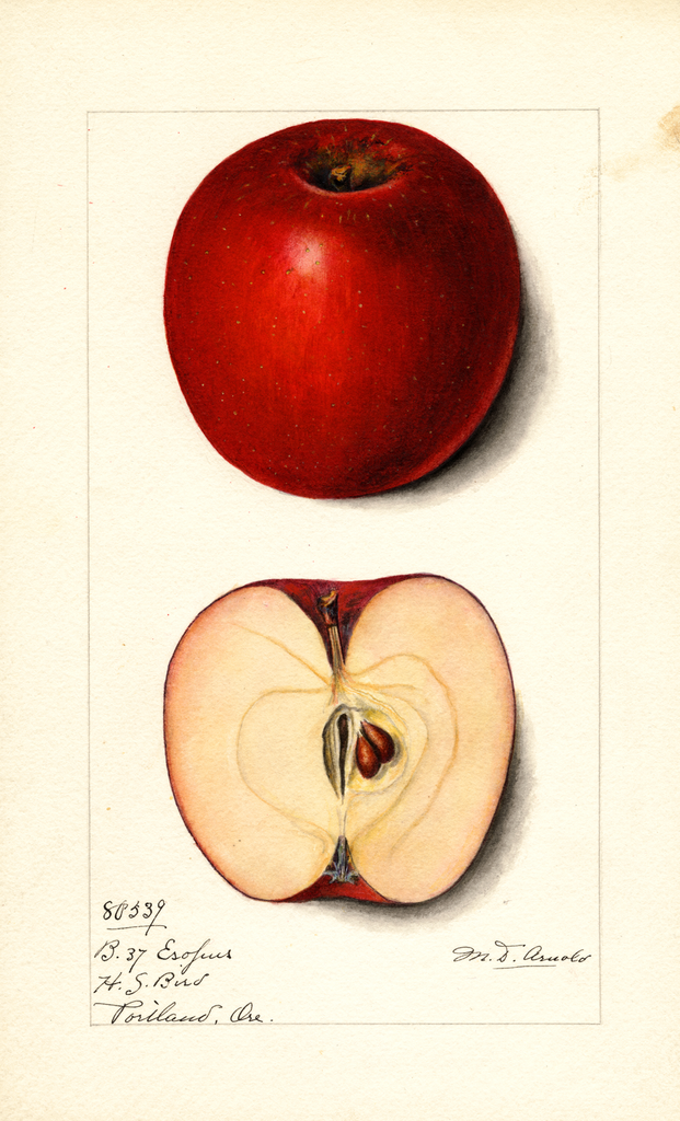 Apples, Esopus