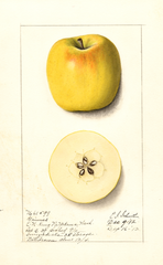 Apples, Grimes (1912)