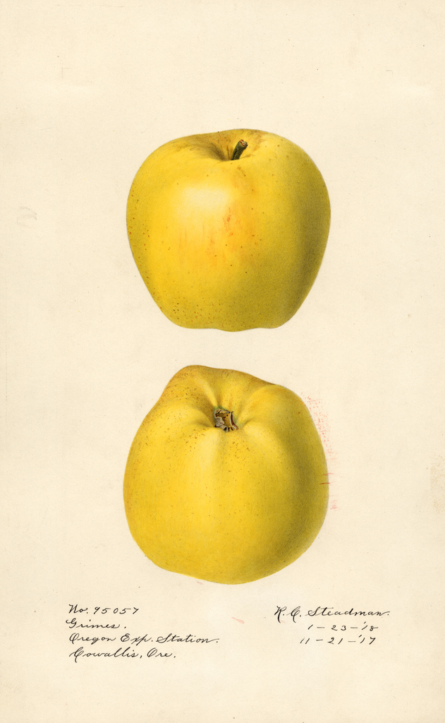 Apples, Grimes (1918)
