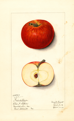 Apples, Grindstone (1913)