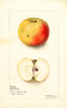 Apples, Fall Cheese (1902)
