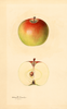 Apples, Gibbs (1932)