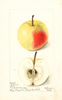 Apples, Gideon (1899)