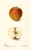 Apples, Gideon Sweet (1902)