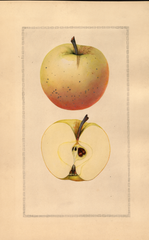Apples, Gilmore (1925)