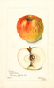 Apples, Givens (1903)