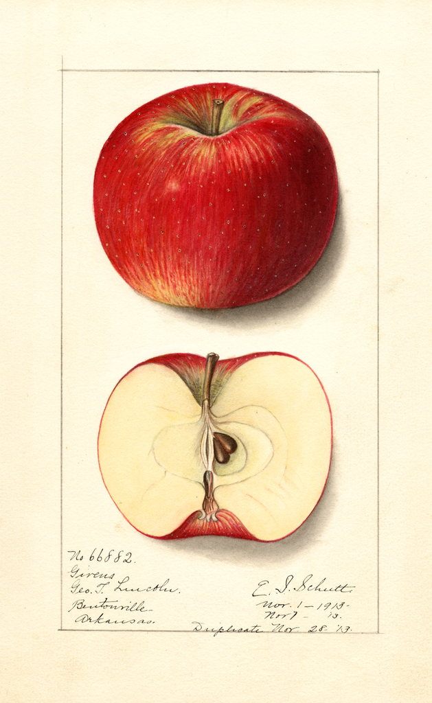 Apples, Givens (1913)
