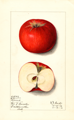 Apples, Givins (1913)