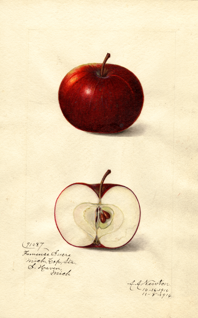 Apples, Fameuse Sucre (1916)