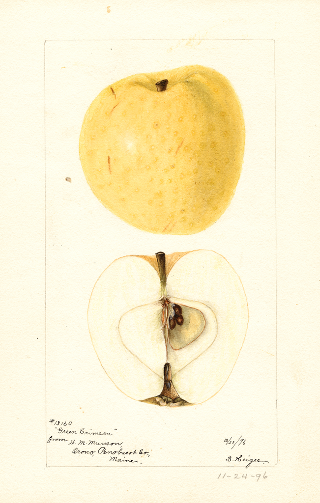 Apples, Green Crimean (1896)