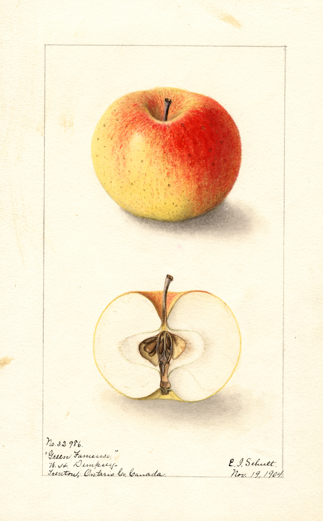 Apples, Green Fameuse (1904)
