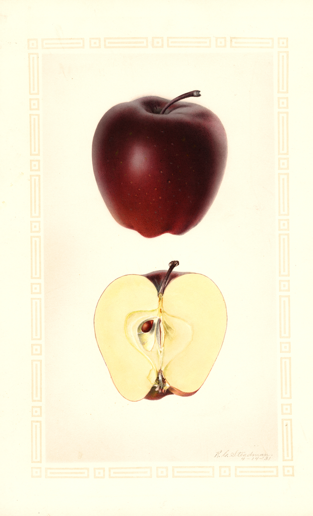 Apples, Seaton Red Delicious (1931)