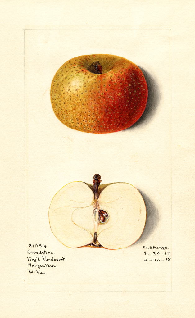 Apples, Grindstone (1915)