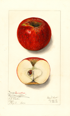 Apples, Grindstone (1912)