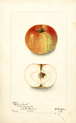 Apples, Darling Sweet (1903)