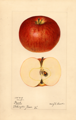 Apples, Grosh