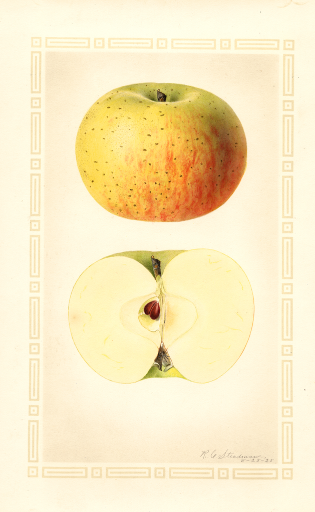 Apples, Grosh (1925)