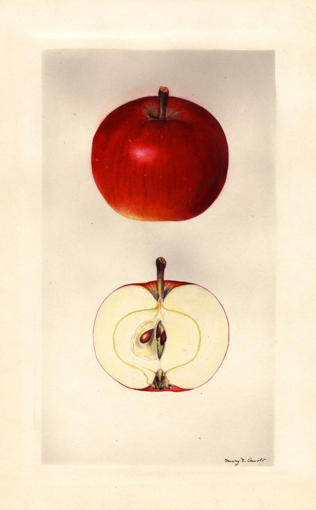 Apples, Grover (1930)