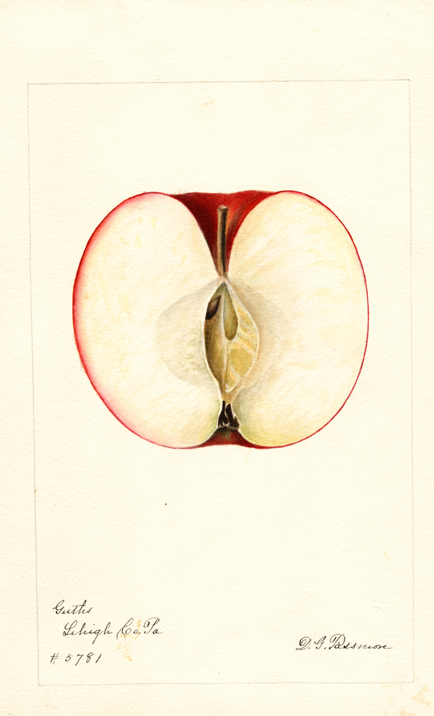 Apples, Guths (1893)