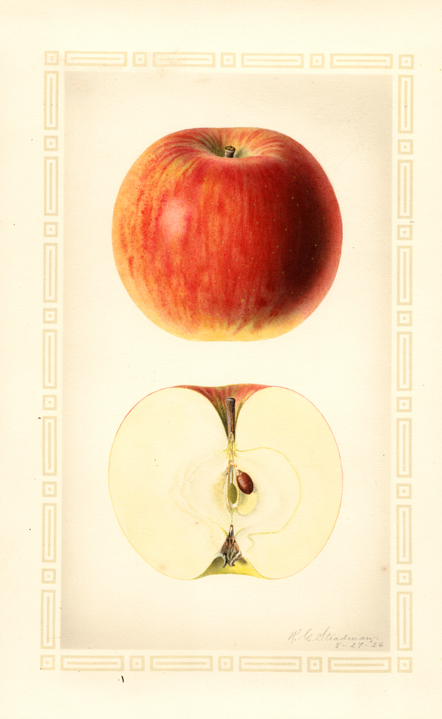 Apples, Hagloe (1926)