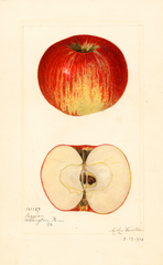 Apples, Hagloe (1921)