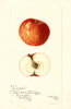 Apples, Hantz Yokel (1897)