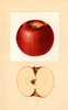 Apples, Haralson (1934)