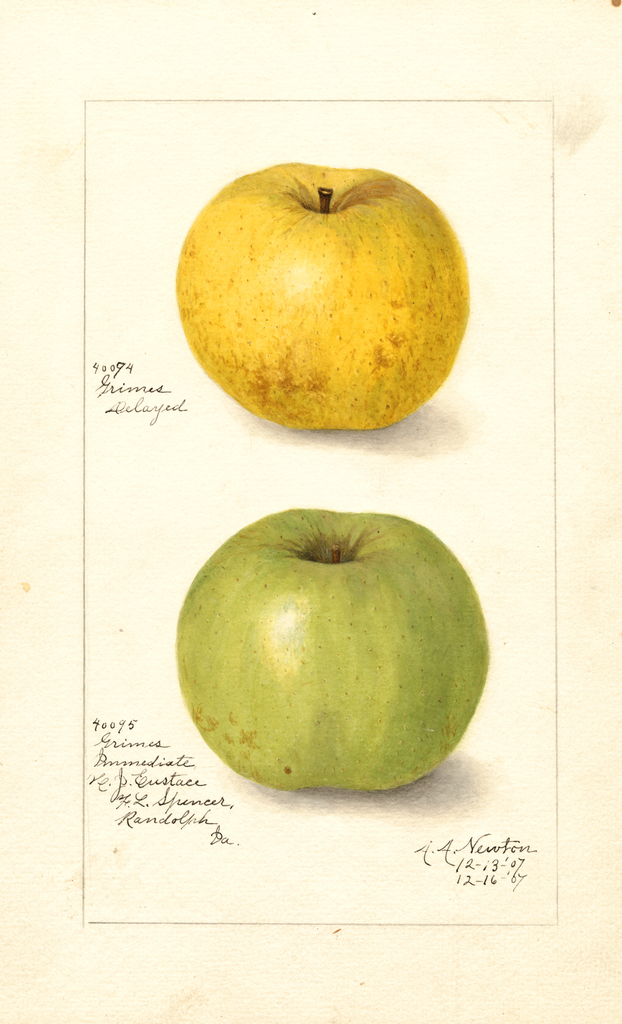 Apples, Grimes (1907)
