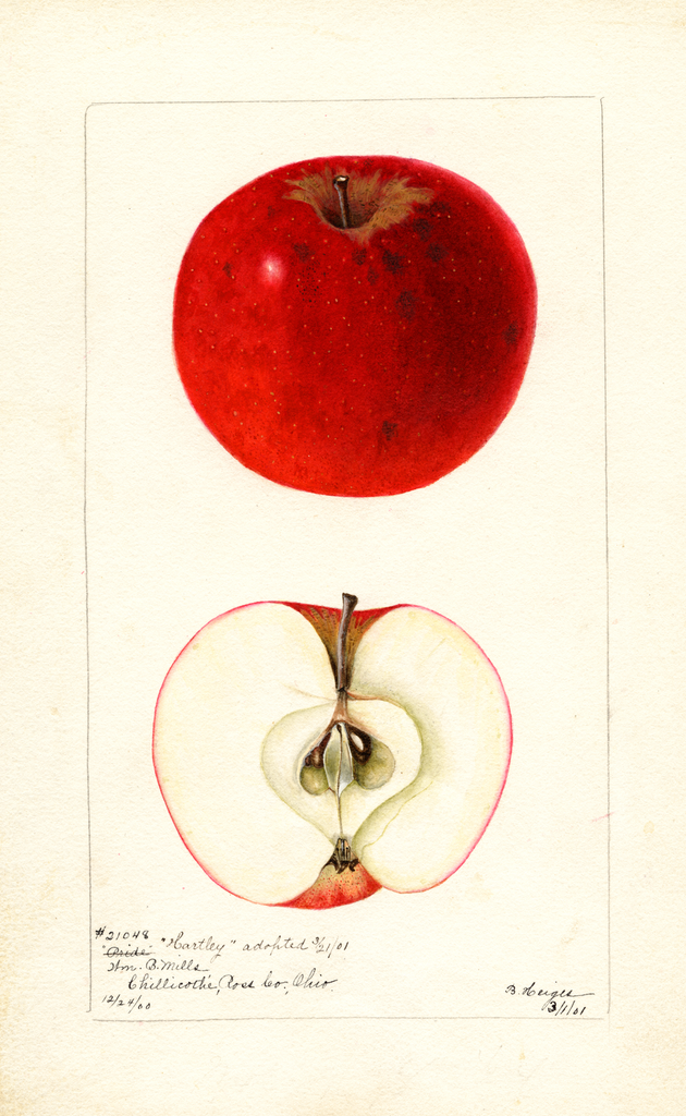 Apples, Hartley (1901)