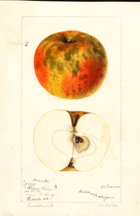 Apples, Harwell (1896)