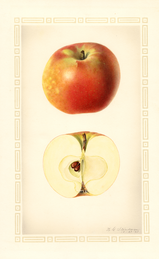 Apples, Haswell (1927)