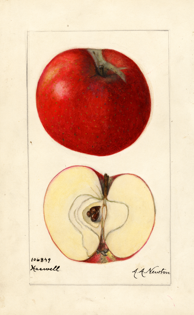 Apples, Haswell