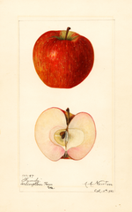 Apples, Family (1921)