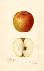 Apples, Family (1920)