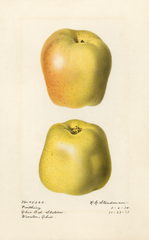 Apples, Farthing (1918)