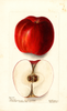 Apples, Florence (1902)