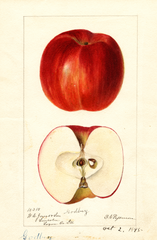 Apples, Godbey (1895)