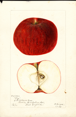 Apples, Loy (1901)