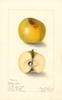Apples, Kittagaskee (1905)