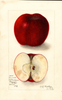 Apples, Kinnard (1910)